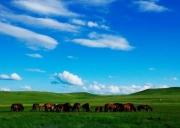 玩美草原与沙漠 希拉穆仁大草原 库布齐沙漠五日游