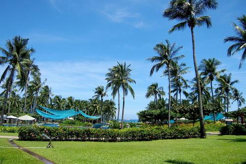 海南三亚椰子树